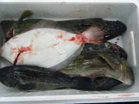 1鮮魚セット12.13