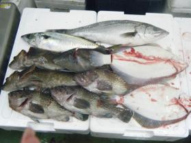 12鮮魚セット12.13