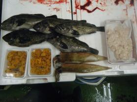 9鮮魚セット12.13