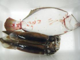 16鮮魚セット12.13