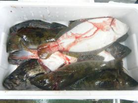 13鮮魚セット12.13