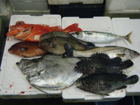 4鮮魚セット12.15