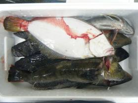 1鮮魚セット12.15
