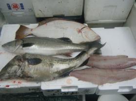 12鮮魚セット12.15