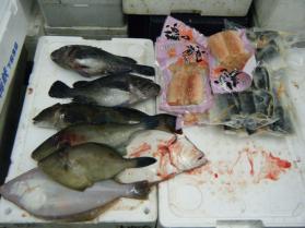 18鮮魚セット12.15