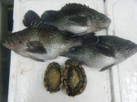 17鮮魚セット12.15