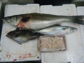 15鮮魚セット12.15