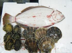 6鮮魚セット12.16