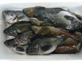 1鮮魚セット12.16