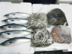 5鮮魚セット12.20