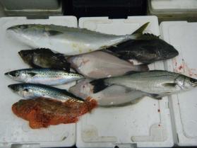3鮮魚セット12.20