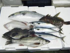 2鮮魚セット12.20