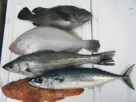 4鮮魚セット12.21