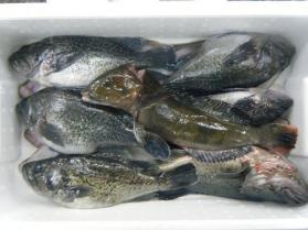 3鮮魚セット12.21