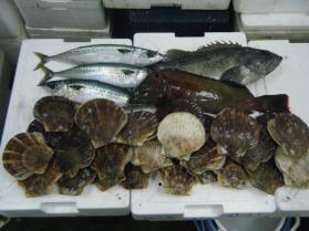 13鮮魚セット12.21