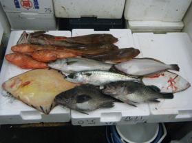 14鮮魚セット12.21