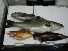 4鮮魚セット12.22