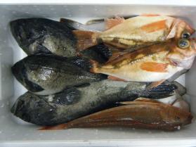 2鮮魚セット12.22
