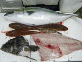 11鮮魚セット12.22