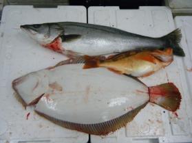 9鮮魚セット12.22