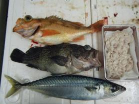 14鮮魚セット12.22