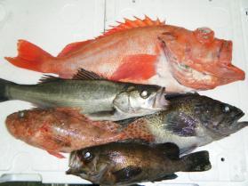 4鮮魚セット12.26
