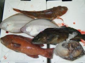 2鮮魚セット12.27