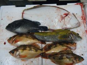 6鮮魚セット12.29