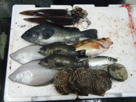 10鮮魚セット12.29