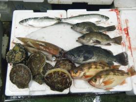 8鮮魚セット12.29