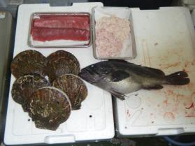 24鮮魚セット12.29