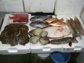 22鮮魚セット12.29