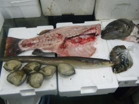 4鮮魚セット12.30