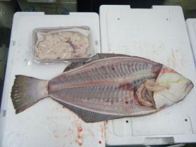 4鮮魚セット1.31
