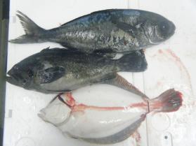 3鮮魚セット1.31