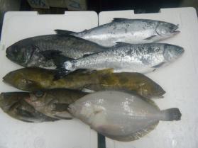 2鮮魚セット1.31