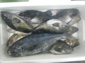 1鮮魚セット1.31