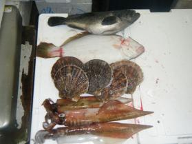 11鮮魚セット1.31