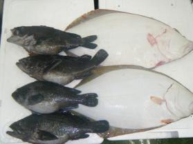 7鮮魚セット1.31