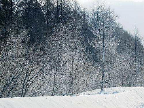 s-ふんわり雪がキラキラしてる