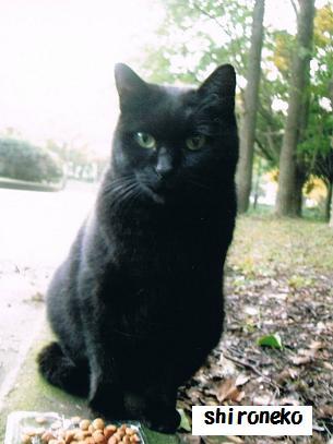 shironekoだけど黒猫