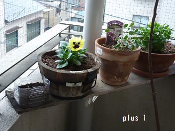 なでしこ20111111-2