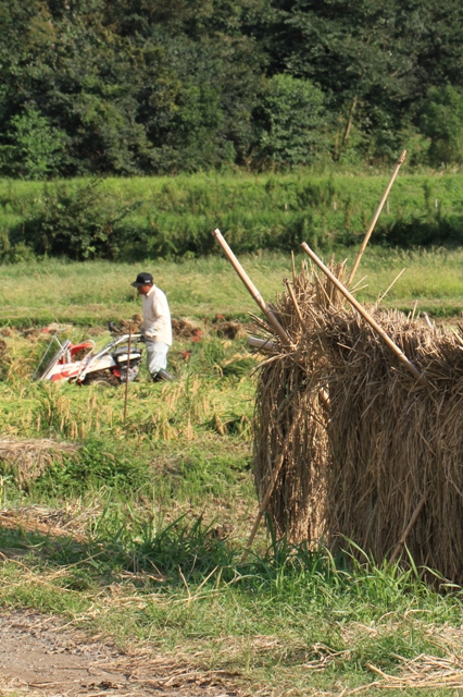 稲刈りまっ最中