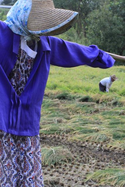 稲刈りを見守る案山子