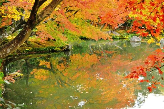 池に写り込む紅葉