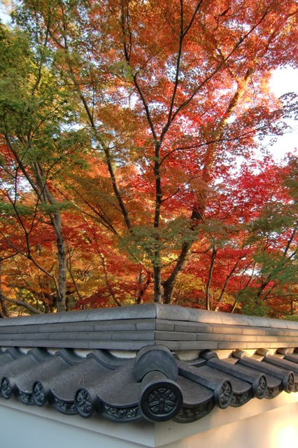 白壁に映える紅葉