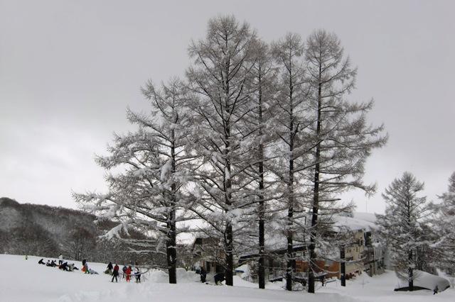 パラダイスゲレンデの上部の雪景色