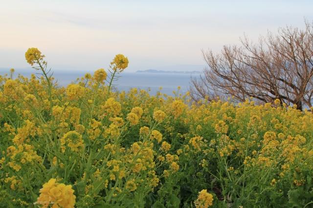 遠くに見える伊豆諸島