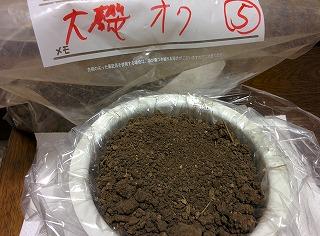 土壌:大磯オク⑤pic