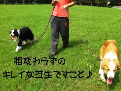 SANY0518_sh01.jpg